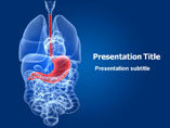 Human Stomach Medical PowerPoint Template
