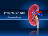 Human Kidney Medical PowerPoint Template