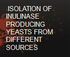 ISOLATION OF INULINASE PRODUCING YEASTS FROM DIFFERENT SOURCES powerpoint presentation
