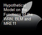 Hypothetical Model on the Functions of the WRN, BLM and MRE11 powerpoint presentation