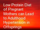 Low Protein Diet of Pregnant Mothers can Lead to Adulthood Hypertension in Offsprings powerpoint presentation