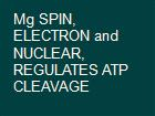 Mg SPIN, ELECTRON and NUCLEAR, REGULATES ATP CLEAVAGE powerpoint presentation