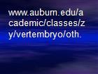 www.auburn.edu/academic/classes/zy/vertembryo/oth. powerpoint presentation